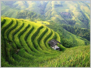 longji-terraced-fields-4